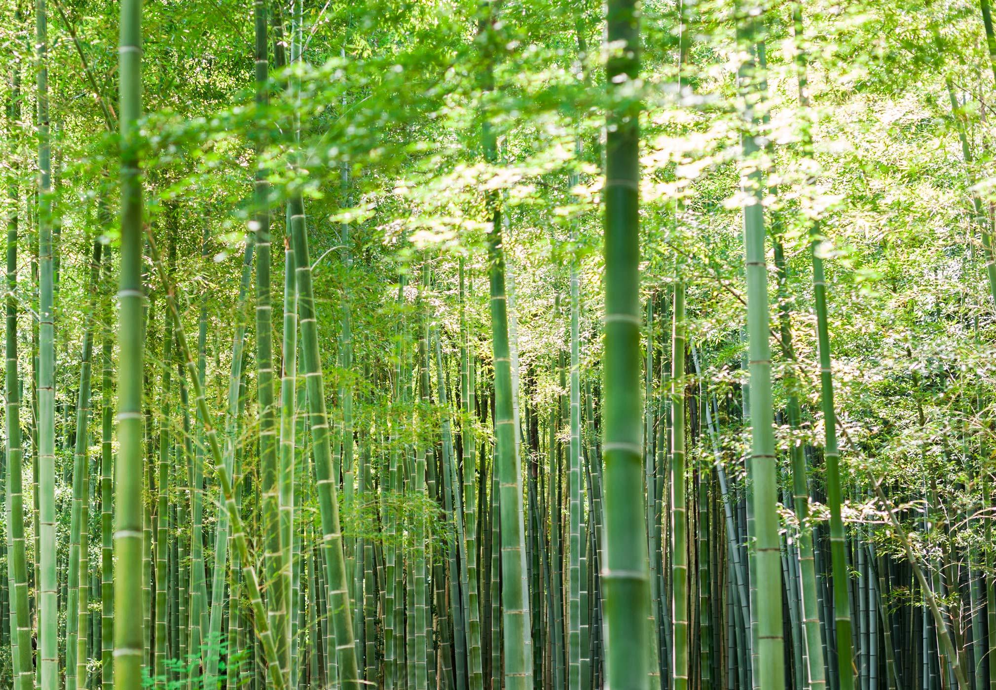 Bamboo-Park-2