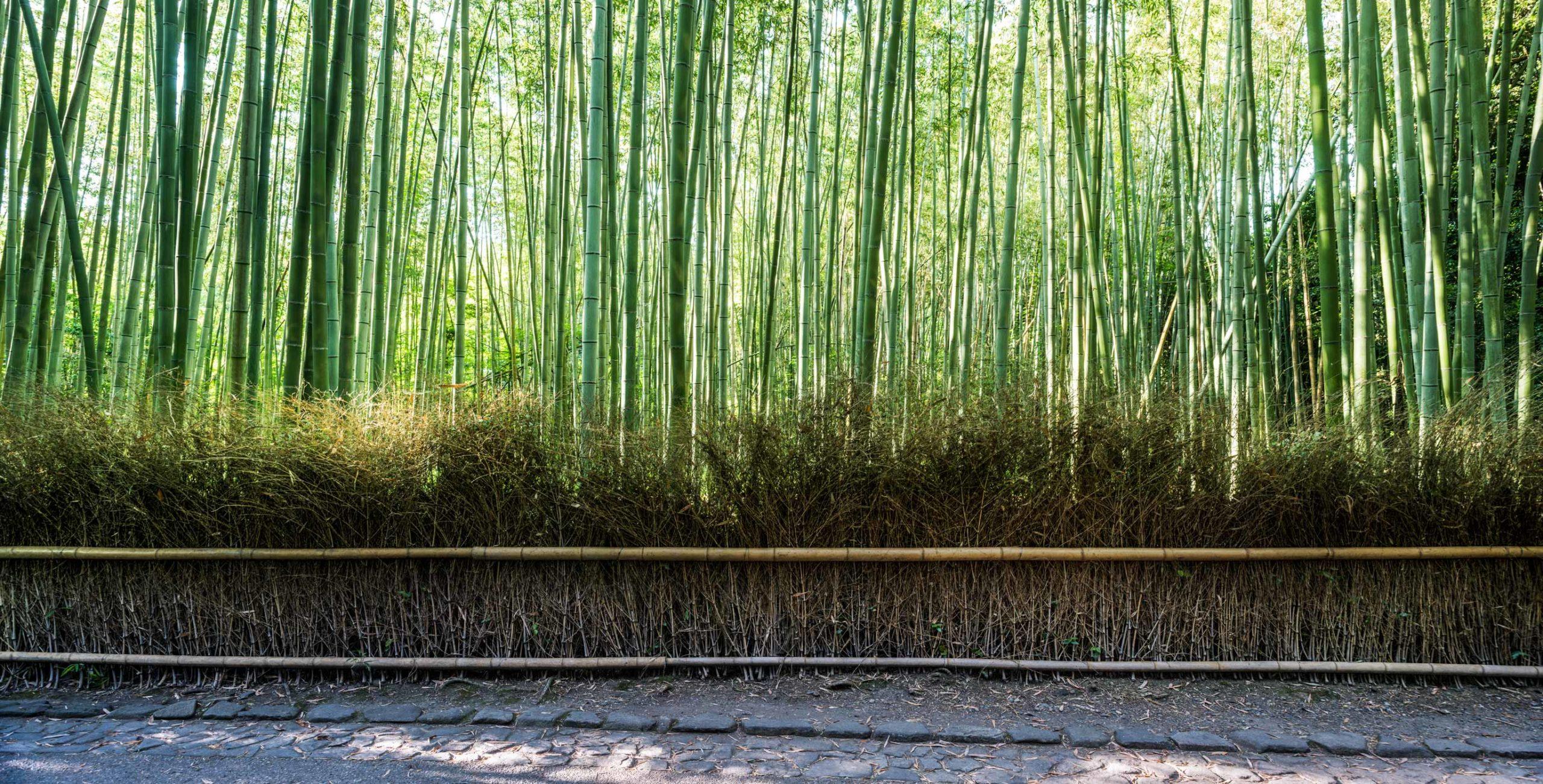 Bamboo-park-1