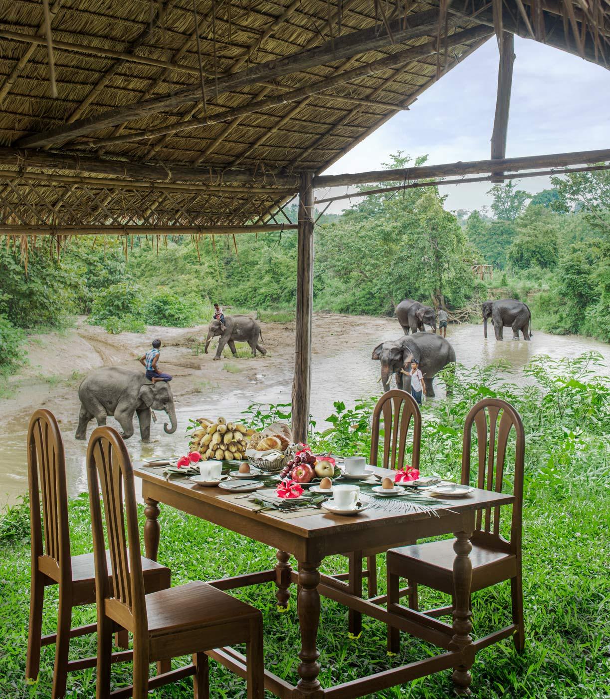 Breakfast-at-elephant-farm